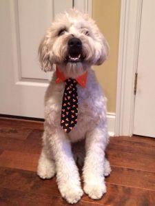 Renly Tie