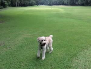 Ren Golfing
