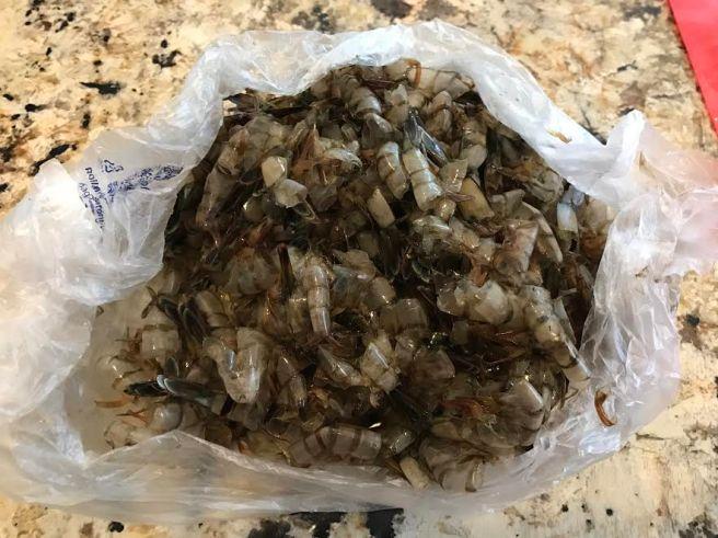 shrimp-shells